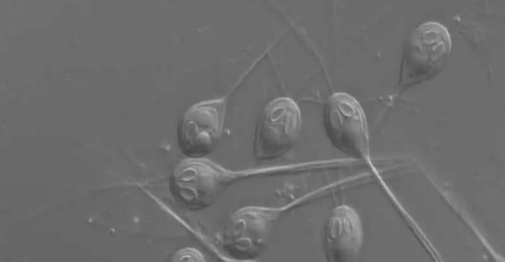 علماء يكتشفون كائن حي لا يتنفس