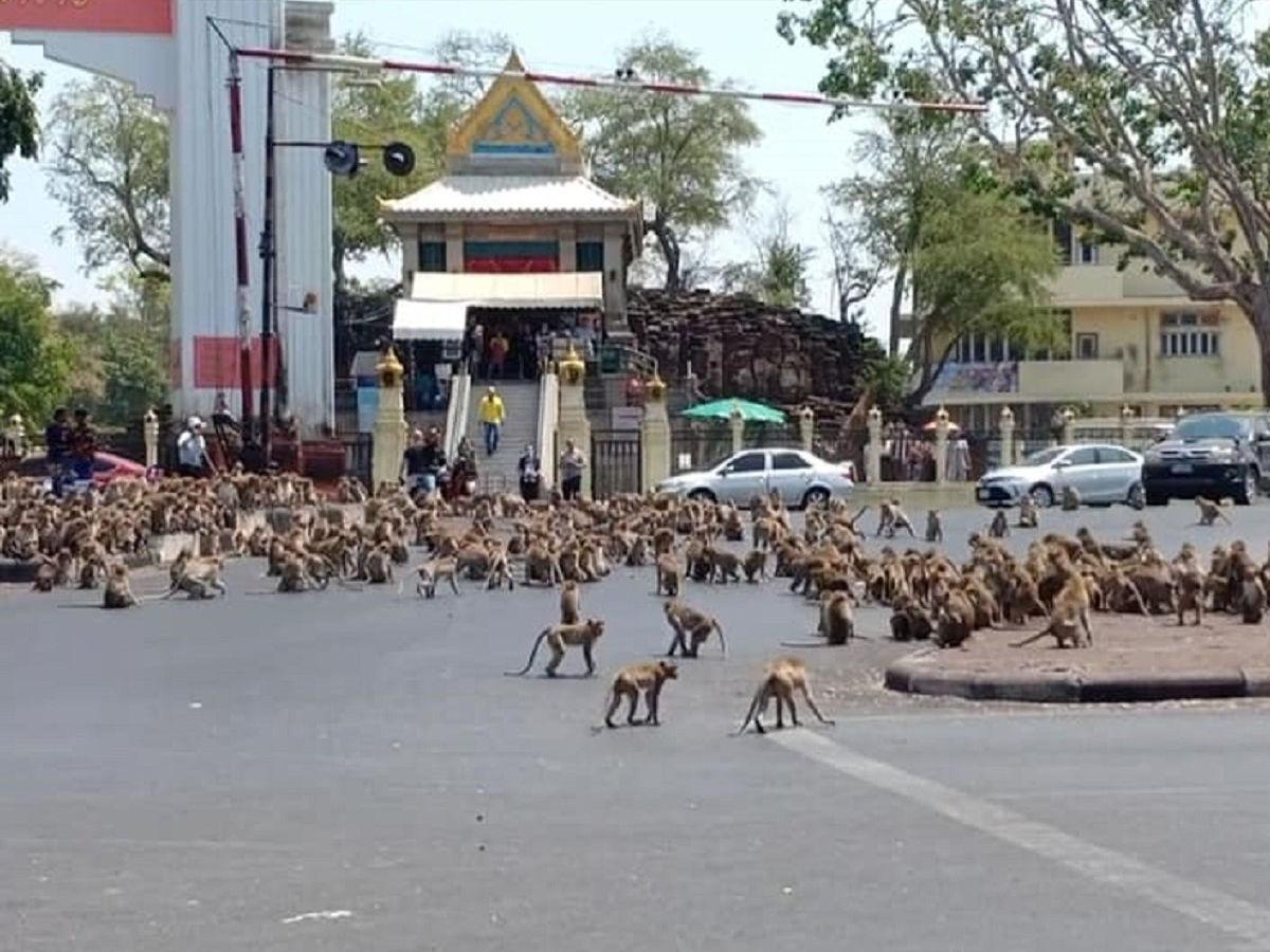 """السكان في """"الأقفاص"""" والقرود في """"الشوارع"""".. القرود تغزو مدينة تايلندية"""
