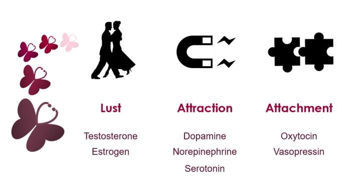 الفيزيولوجيا و الحب