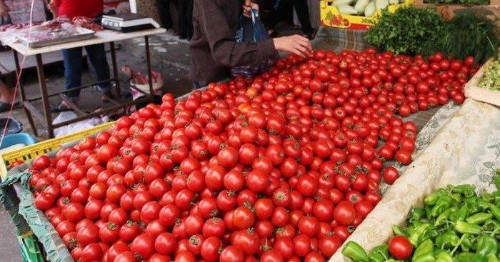 عضو لجنة تجار ومصدري سوق الهال : 80 بالمئة من البندورة في سوق الهال مصابة بآفة الدودة لعدم استخدام المبيدات بعد ارتفاع أسعارها