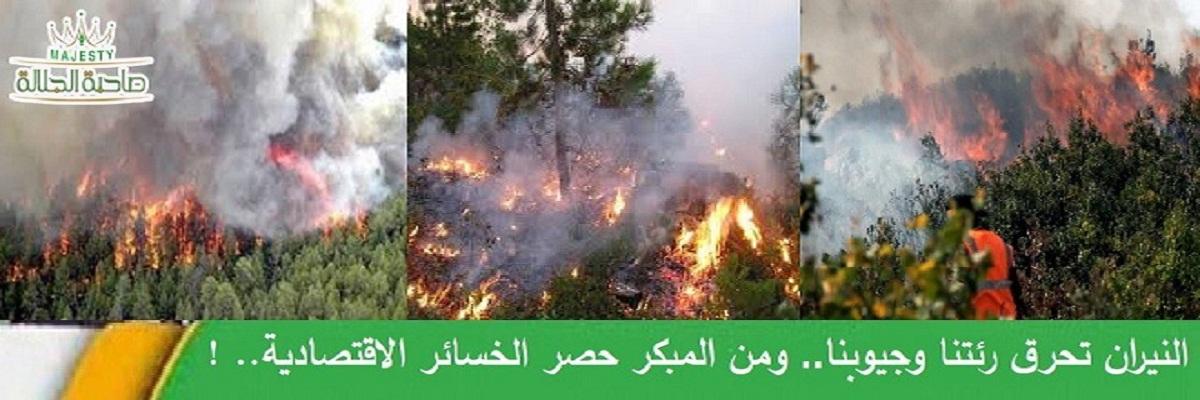 من يحرق غاباتنا..؟