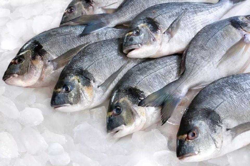 سوق السمك ينتعش في ظل التوجه للبحث عن اللحم البديل