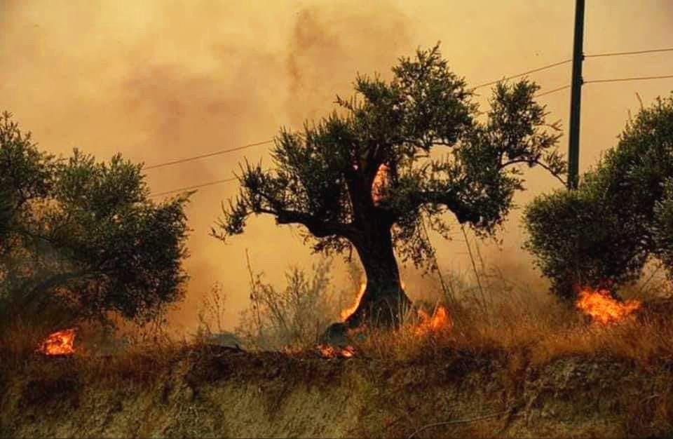 رئيس اتحاد الفلاحين في سورية:70 بالمئة من أشجار الزيتون في الداخل السوري ولم تتأثر.