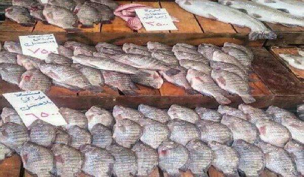 (4561) طناً إنتاجنا من السمك ...ارتفاع غير منطقي لأسعار السمك