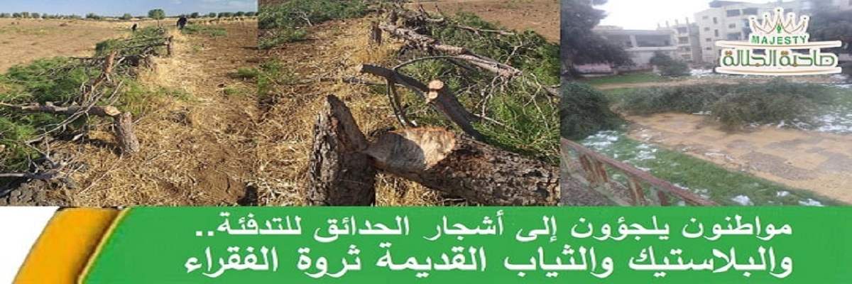 مواطن يشعل أحذية ضيوفه دون أن يعلموا.. وآخرون يقتلعون أشجارهم نكاية باللصوص