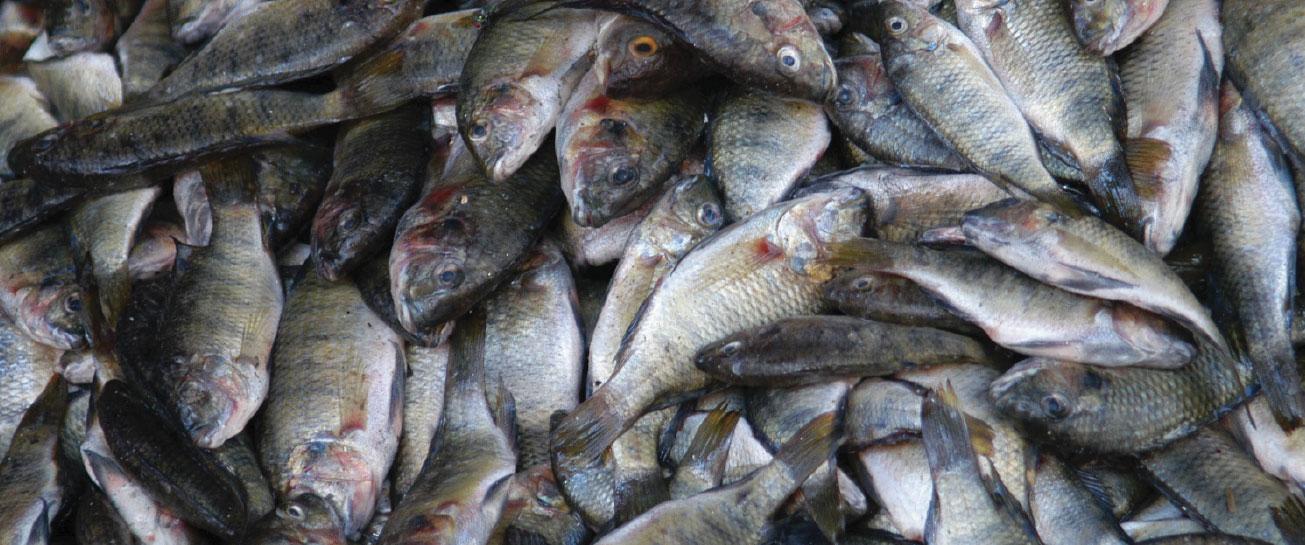 أسعار السمك تصل إلى أرقام خيالية ... التموين تبرر الأمر بيد العرض والطلب!