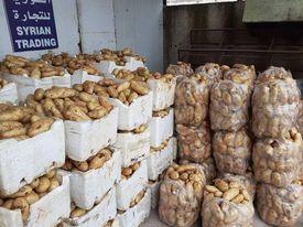 السورية للتجارة تطرح كميات إضافية من البطاطا وبنفس السعر