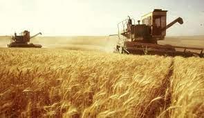 روسيا ستورد مليون طن من القمح إلى سورية