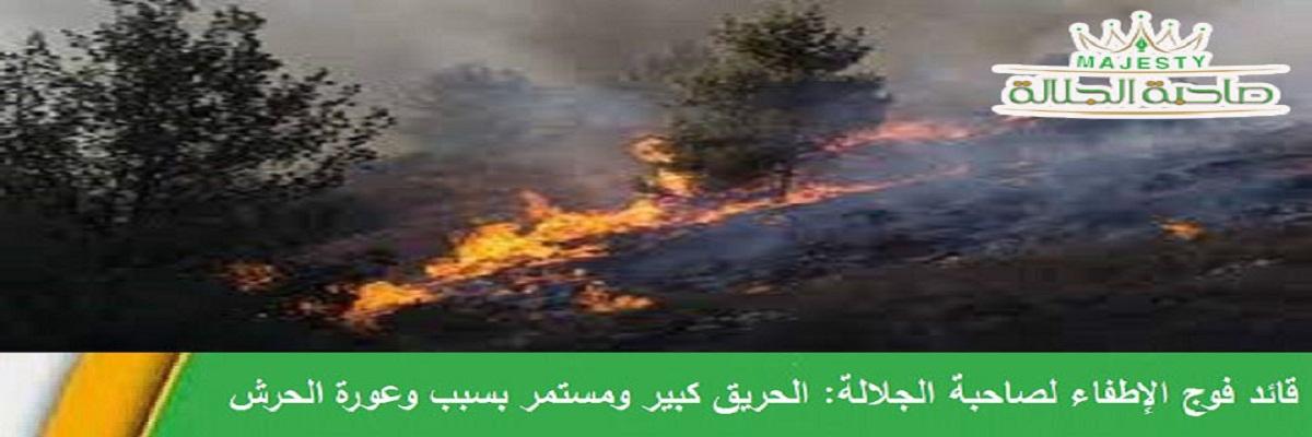 الآن.. حريق ضخم في حرش قنوات بالسويداء