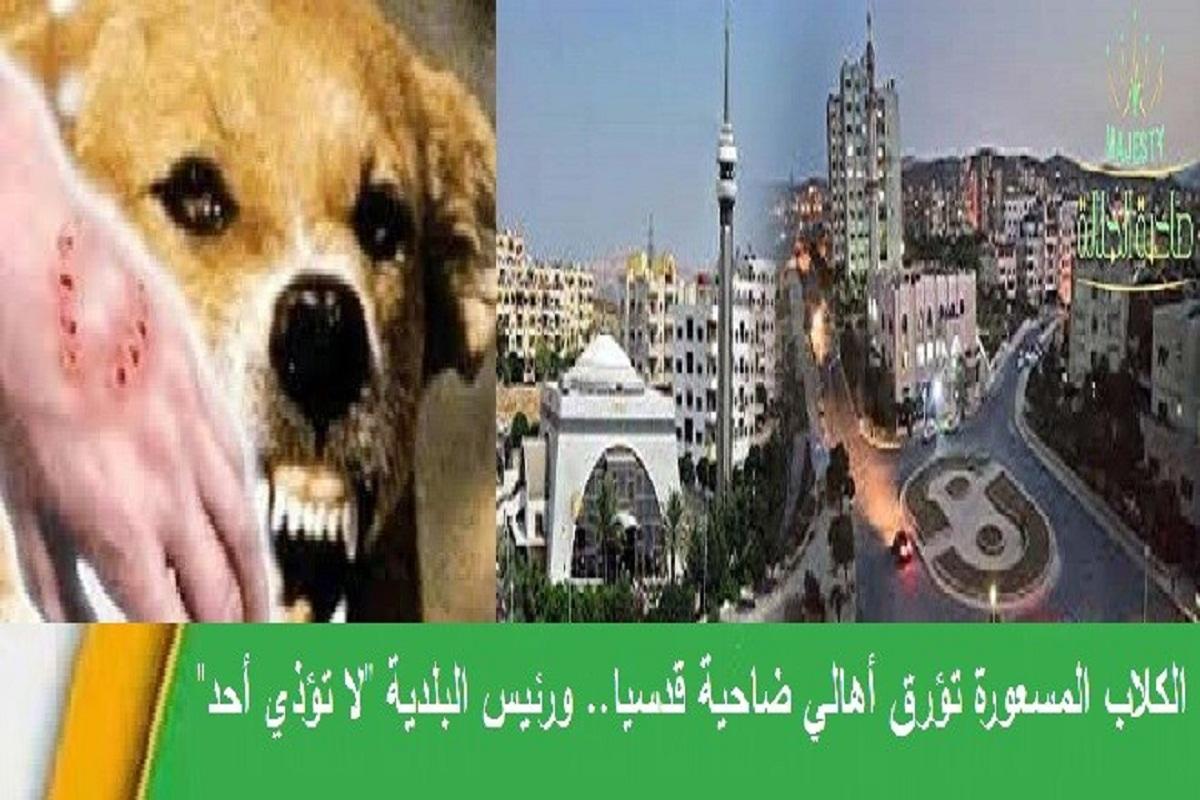 أهالي الجزيرة (إف 2) بضاحية قدسيا للسيد محافظ ريف دمشق
