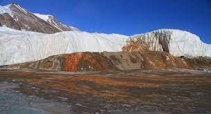 الدم الجليدي سببه الطحالب