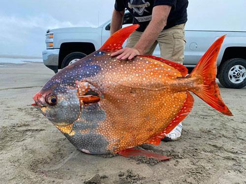 ذعر وخوف بسبب سمكة.. !!
