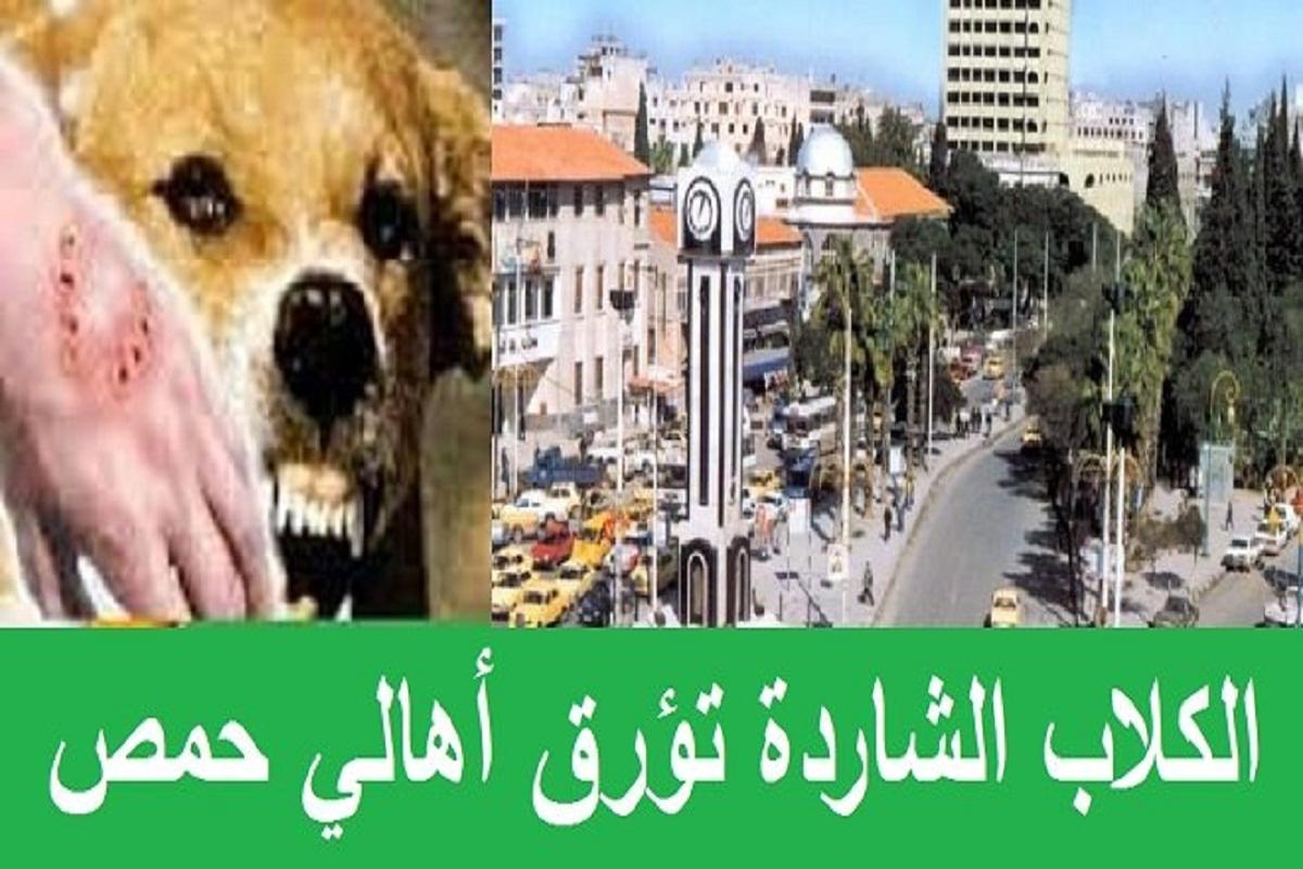 الكلاب الشاردة تؤرق أهالي حمص