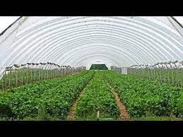 مزارعو البيوت البلاستيكية : سنعتزل المهنة والسبب ارتفاع مستلزمات الإنتاج